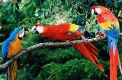 鹦鹉说话受哪些条件的限制