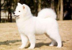 最初级狗狗的肢体语言