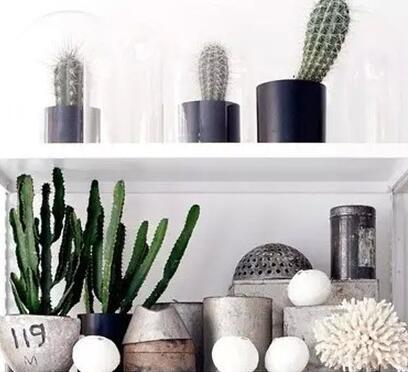 小清新绿植,让家充满绿色和谐的味道