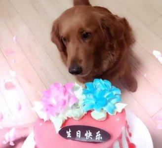 可爱豆沙五岁了,生日美美
