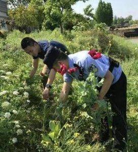 仙桃一男子在家种植千株罂粟花 已被刑