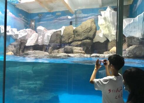 开设专属团队入口,河南游客为武汉海昌点赞